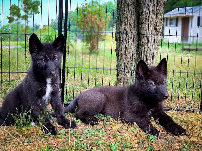 Sitka and Rayne