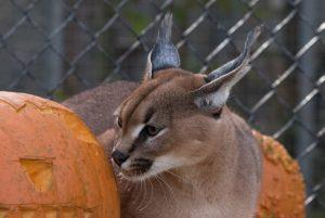asher_pumpkin