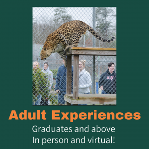 Adult Experience (1)