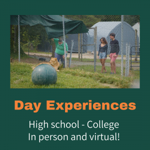 Day Experiences